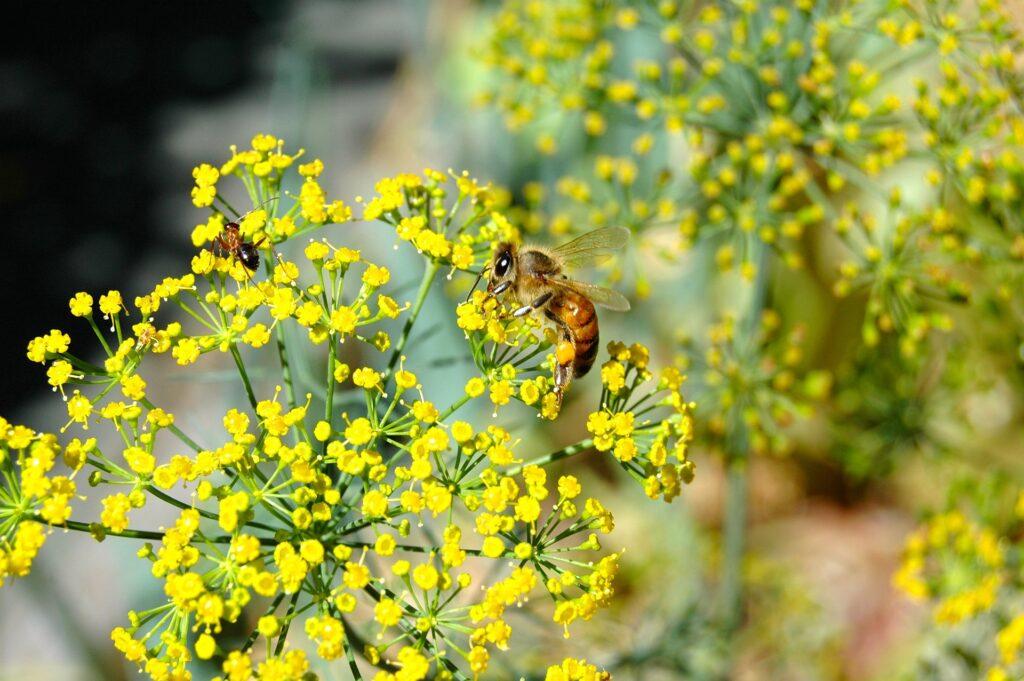花粉症が飛び回ってる花畑