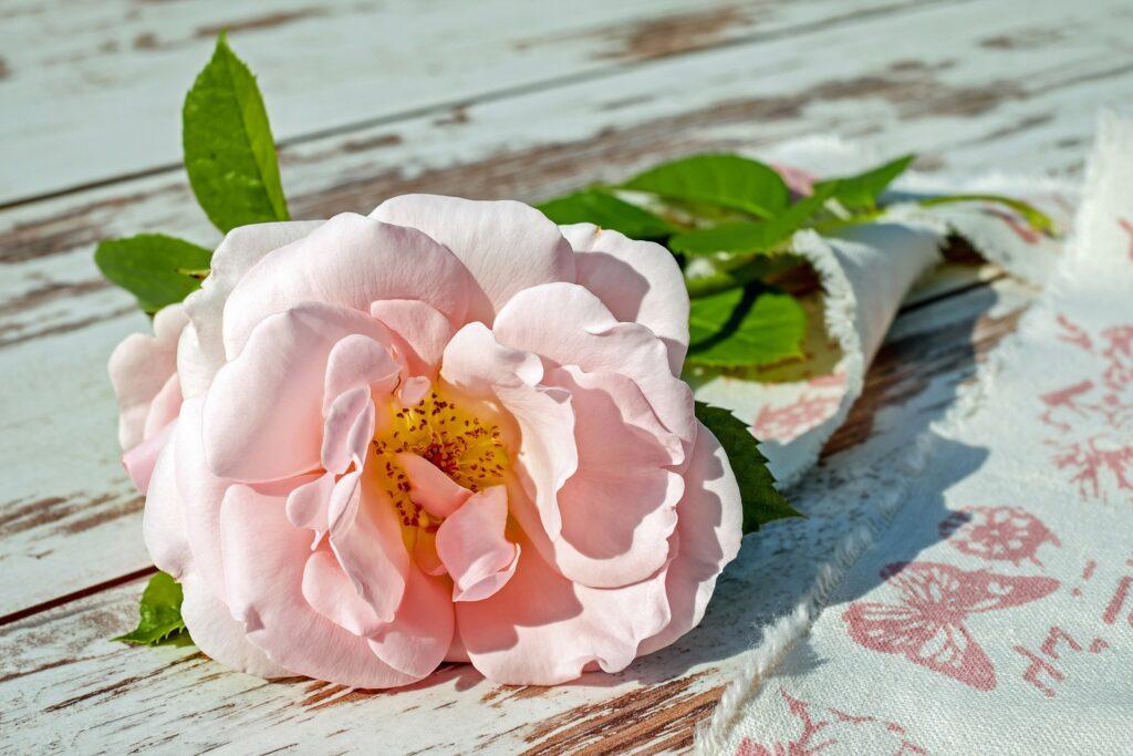 綺麗なピンクのバラが置いてある